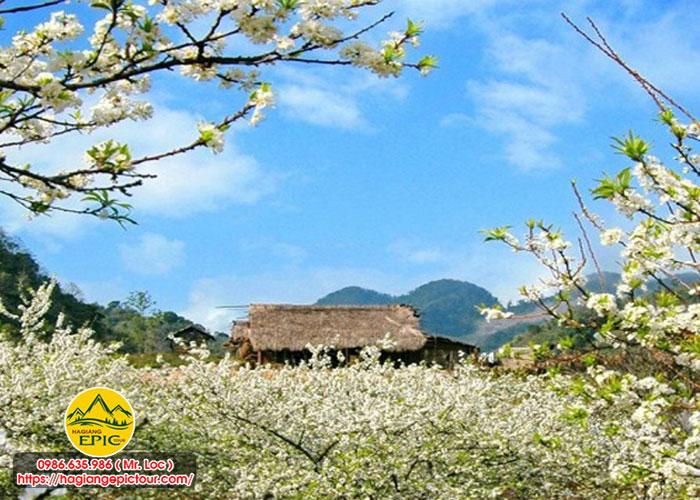 Ngắm Hoa Mận, Hoa Đào Vùng Núi Tháng 3