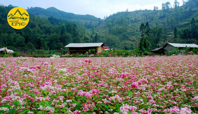 Tam Giac Mach Ha Giang