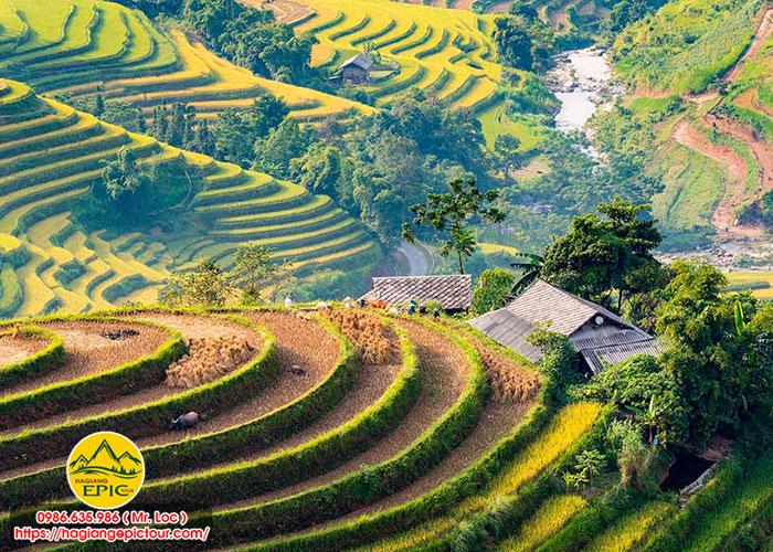 Dịch Vụ Tour Hà Giang Hoàng Su Phì 3 Ngày 3 Đêm