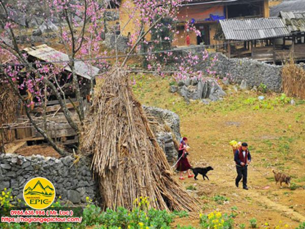 Lịch Trình Đi Tour Hà Giang Đi Xe Máy 2 Ngày 3 Đêm Dịch Vụ Đảm Bảo Giá Rẻ