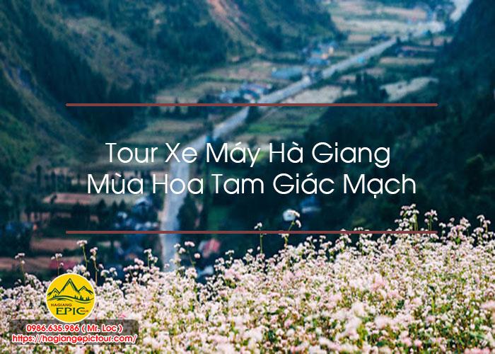 Tour Xe May Ha Giang Mua Hoa Tam Giac Mach